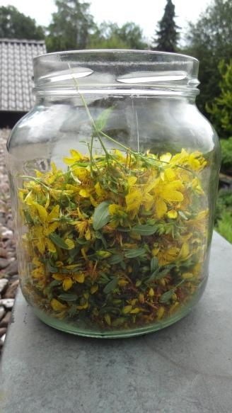 Frische Blüten, Knospen und oberste Blätter