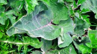 grünes Taschentuch