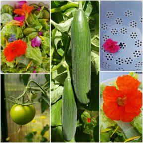 Glücklich Gärtnern im Gewächshaus   BeetSchwestern