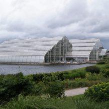 Das Gewächshaus der Royal Horticultural Society in Wisley, England. Darin wachsen auch Palmen.