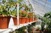 Chilischoten gedeihen in Kübeln ganz wunderbar, wenn Licht, Luft, Wasser und Düngung stimmen.