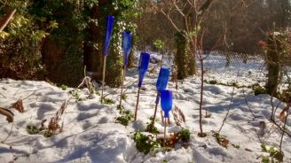 Winterdeko im Garten