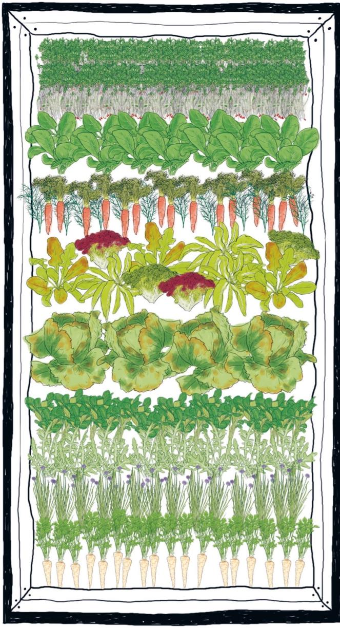 """Pflanzbeispiel für ein """"Mach-dich-fit- Hochbeet"""" Illustration von Ruth Veres"""